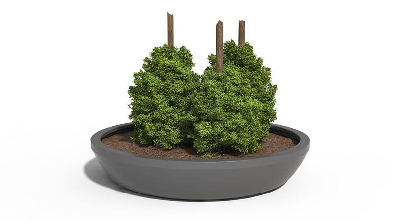 Dahlia plantekumme